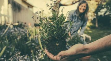 Companion Planting: Boost Your Garden With Essential Oils