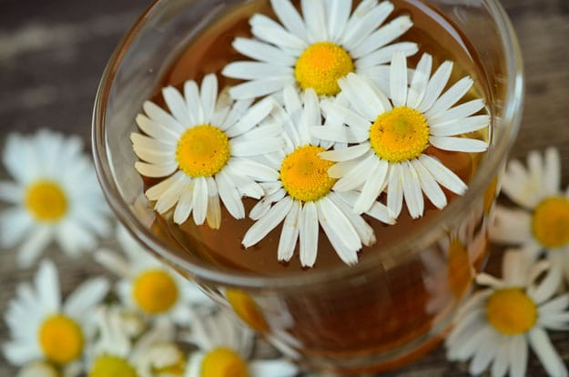 Roman Chamomile | Essential Oils for Sleep and How To Use Them