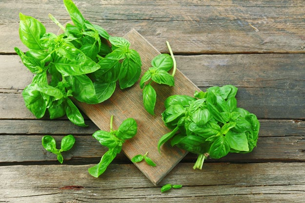 Basil Oil | 7 Leading Essential Oils For Allergies