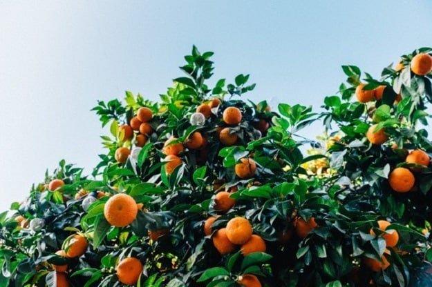 Wild Orange | Aromatherapy Guide: Managing Your Emotions