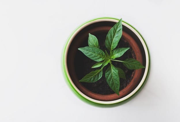 Peppermint | Aromatherapy Guide: Managing Your Emotions