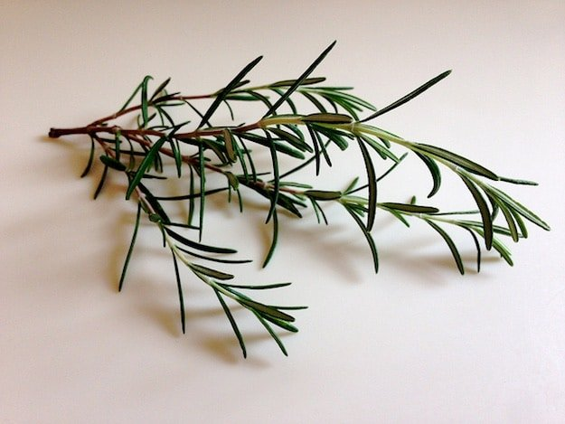 Rosemary | Aromatherapy Guide: Managing Your Emotions