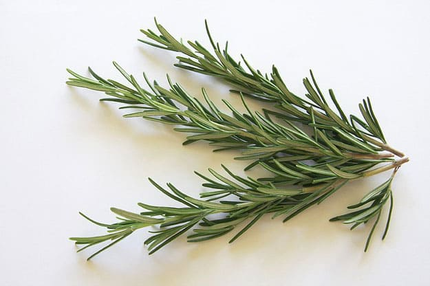 Rosemary Oil | Essential Oils for Acne | Essential Oils for Acne Prone Skin You Can Count On