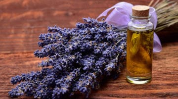 Lavender Essential Oil and Its Uses