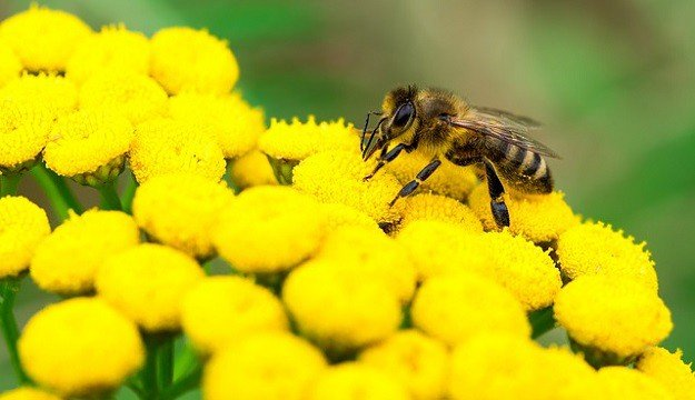 Best Essential Oils to Help Pollinate Your Plants   Best Essential Oils for Gardening