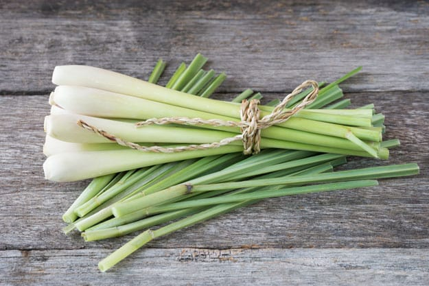Lemongrass | Essential Oils for Warts