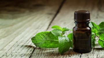 Is Peppermint Oil Pest Control Effective?