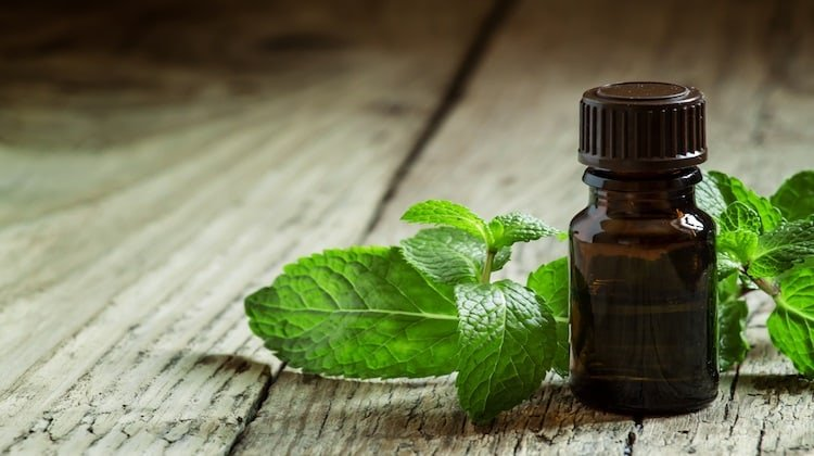 Is Peppermint Oil Pest Control Effective Life Beyond