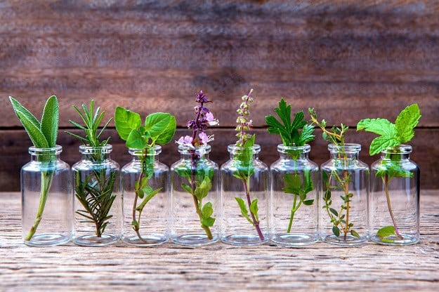 Gather the Materials and Ingredients You Need | How To Make Patchouli Oil? | A Life Beyond Organic Guide