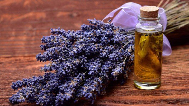 Lavender Essential Oil and Its Uses | List of Essential Oils: Organic Facts and Its Benefits