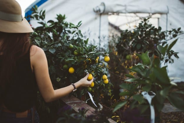 Going Organic Is A Financial Commitment | Is Organic Food Really Better Than Non-Organic