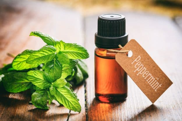 Essential Oils to Take Care of Your Skin   Best Essential Oils for Gardening