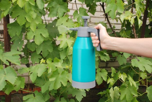 Best Essential Oils to Kill Fungus   Best Essential Oils for Gardening