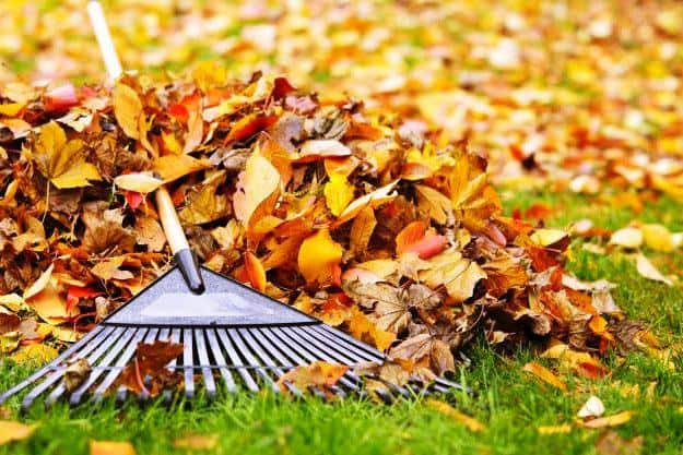Keep Your Garden Clean of Dead Leaves | Organic Gardening Tips For Beginners