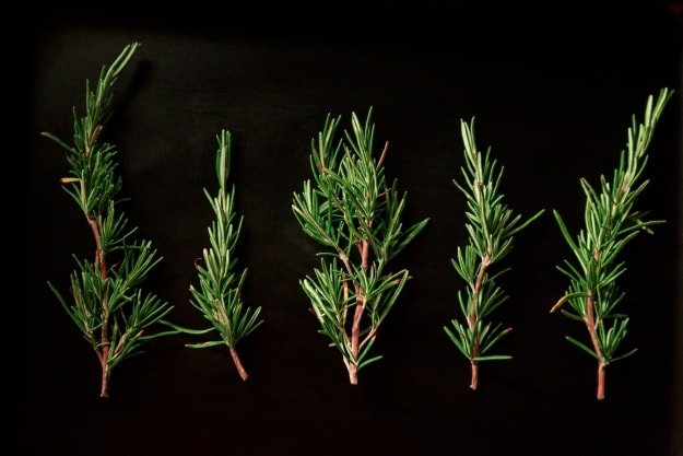 Rosemary | Essential Oils For Pain | Life Beyond Organic