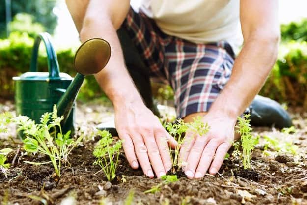 Know How To Properly Water Your Plants | Organic Gardening Tips For Beginners