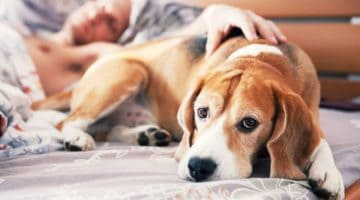 Feature | Alleviate Dog Allergies With These Essential Oils