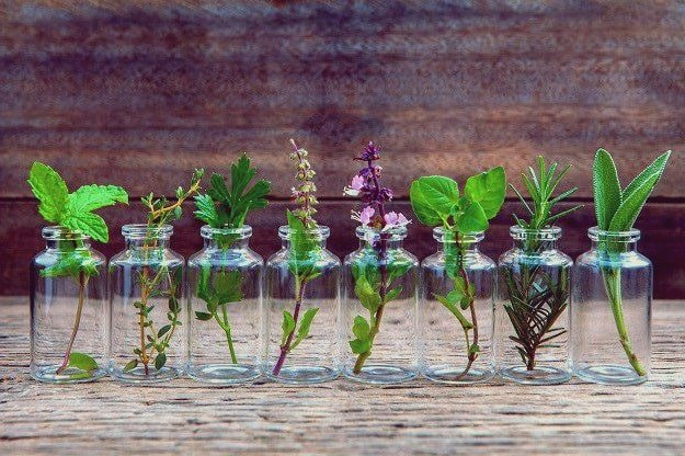 Natural Remedies For Morning Sickness: Can Essential Oils Help Treat It?