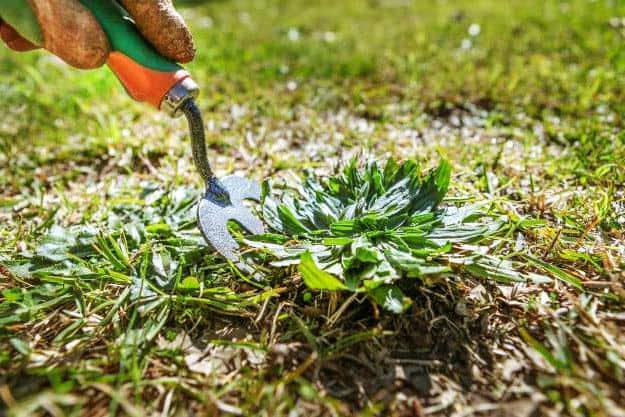 Get Rid of Weeds and Keep Them Away | Organic Gardening Tips For Beginners