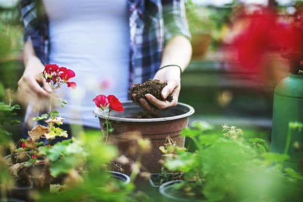 Keep the Soil Healthy | Organic Gardening Tips For Beginners