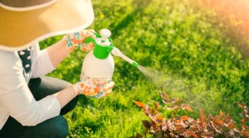 Feature | Organic Pesticides For A Healthy Garden
