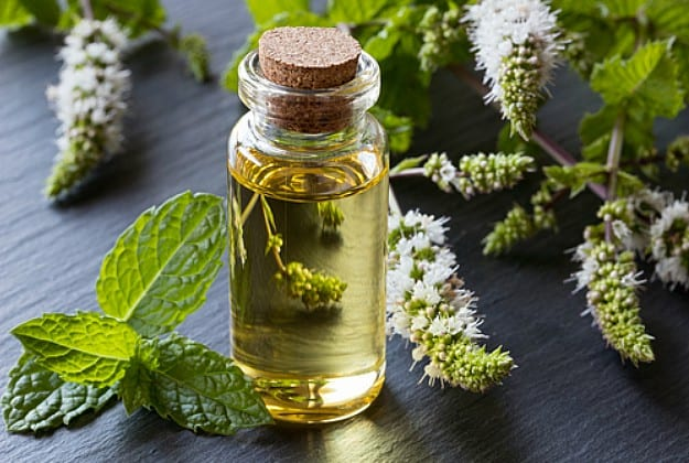 Peppermint Oil Benefits You Should Know About
