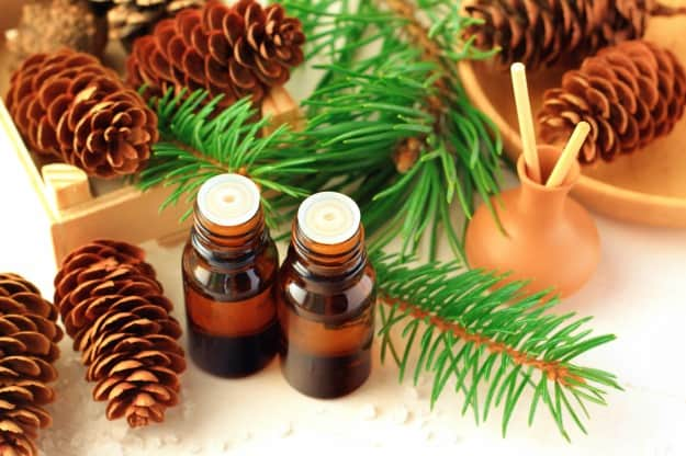 Pine Needle | Christmas Essential Oils | Christmas Essential Oils For Some Festive Aromatherapy