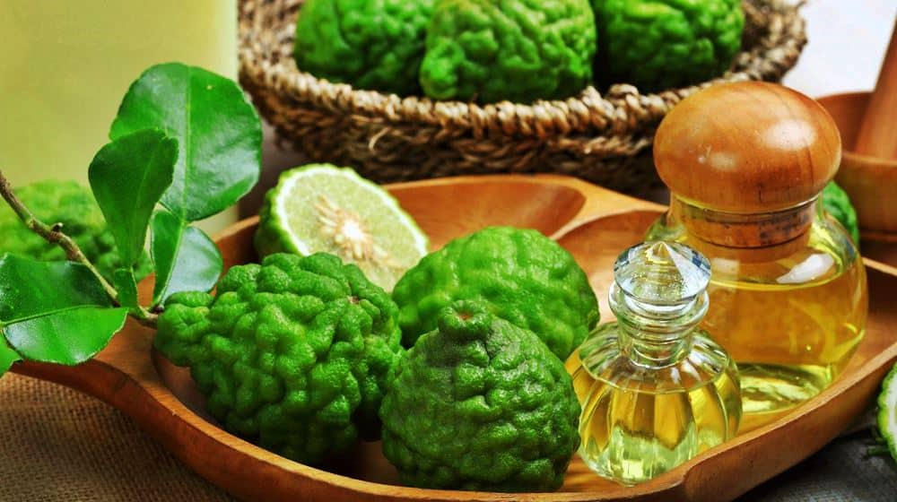 Feature | Bergamot Essential Oil Uses And Benefits